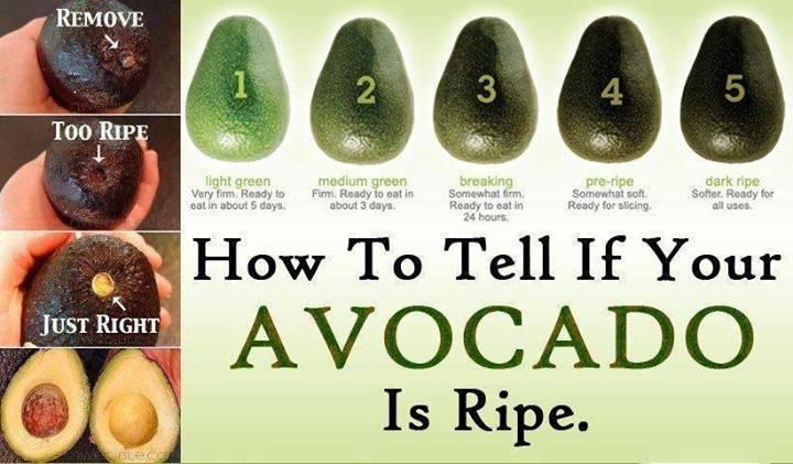 avocado copt cat trebuie